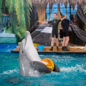 Дельфинарии, океанариумы Шарлыка