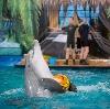 Дельфинарии, океанариумы в Шарлыке