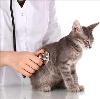 Ветеринарные клиники в Шарлыке